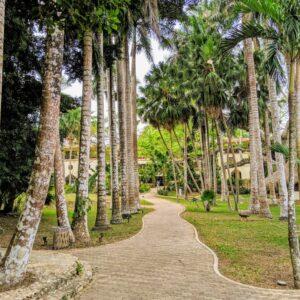 Mayaland Palm Trees