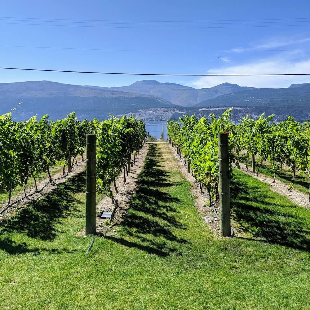 50th Parallel Estate Winery Vineyard