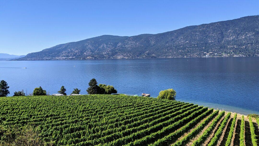 Lake Country Vineyard